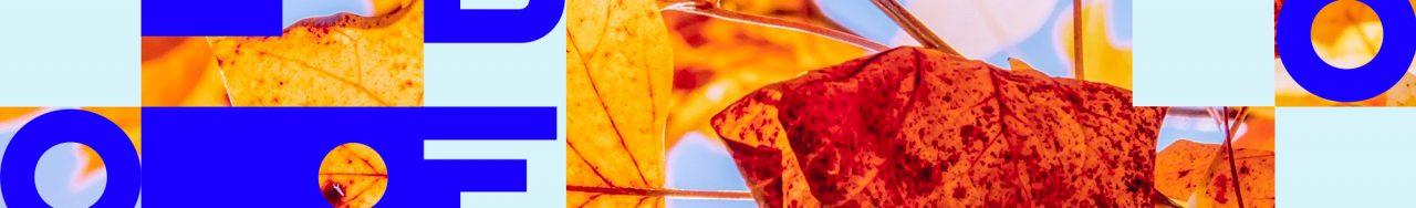 Image de feuilles d'automne avec le logo Libeo en forme géométrique